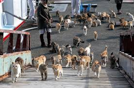 cat island an island with more cats than people the purrington post