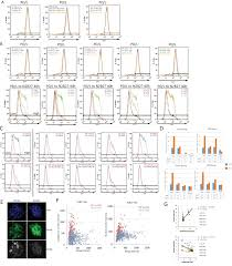 a lncrna fine tunes the dynamics of a cell state transition