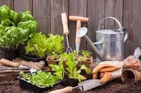 how to transform your yard into an eco friendly garden