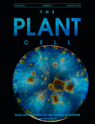 Arabidopsis Paired Amphipathic Helix Proteins SNL1 and SNL2