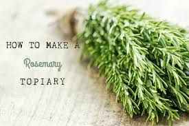 Herb Topiaries How To Make A Rosemary Topiary