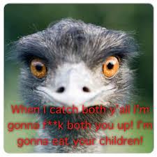 Ostrich Meme - kevin hart ostrich 2 funny pinterest kevin hart ostrich