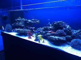 Saltwater Aquascaping Mikes 80 Gallon Shallow U0026 Rimless Tank Reef2reef Saltwater And