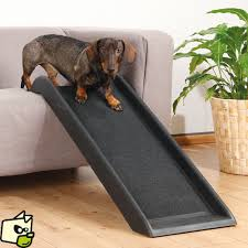 protection canapé chien re pour faciliter l acces aux animaux handicapés