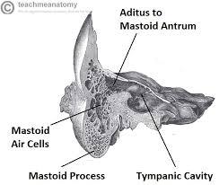 Behind The Ear Anatomy The Temporal Bone Parts Fractures Teachmeanatomy
