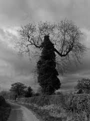 gnarly trees flickr