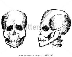 skull side view stock images royalty free images u0026 vectors