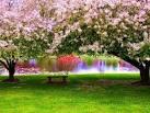 อัลบั้มรูป ดงดอกไม้สวยๆ