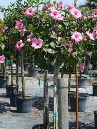 grays ornamentals growers of ornamental tropical plants