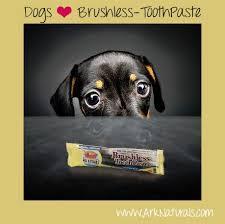 Toothpaste Meme - dogs love brushless toothpaste meme