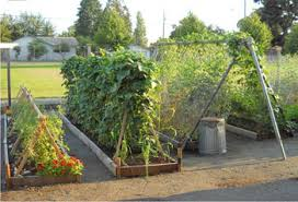 How To Plant A Garden In Your Backyard Building A Garden Soil Science Society Of America