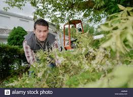 overgrown garden gardener stock photos u0026 overgrown garden gardener