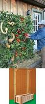 Backyard Vegetable Garden Ideas 22 Best Garden Images On Pinterest Gardening Vegetables Garden