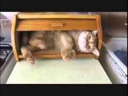 Cat In Bread Meme - this cat is comfortable in his bread bin youtube