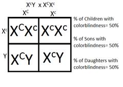 inheritance pattern quizlet test science by tdk quizlet