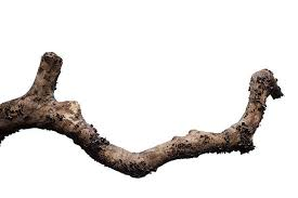 free branch tree images pictures and royalty free stock photos