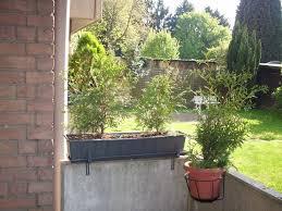 pflanzen f r balkon sichtschutz aus pflanzen für balkon gesucht garten