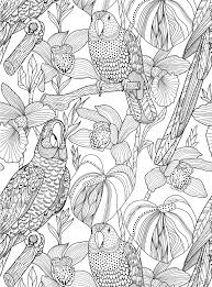 homelife colour homelife u0027s colouring book