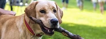 imagenes de animales y cosas la ley deja de considerar cosas a los animales y reconoce su