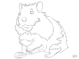 cute hamster coloring page free printable coloring pages