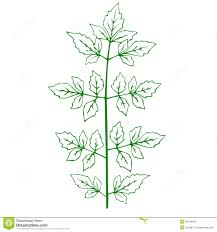outline of a green plant stock images image 30342404