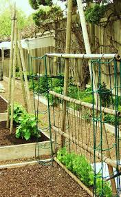Trellis With Vines The Garden Oracle Supports Trellises Gardening Advice U0026 Supplies