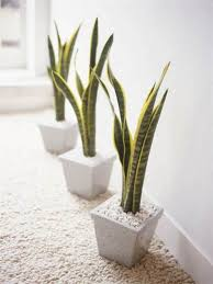 Creative Ways To Include Indoor Plants Into Your Home Décor - Home decoration plants