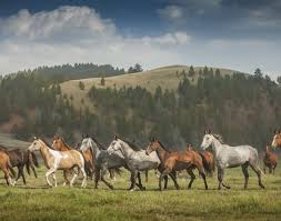 Montana how far can a horse travel in a day images Luxury resort in montana guest ranch the ranch at rock creek jpg