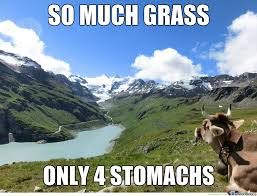 Grass Memes - so much grass funny cow meme