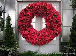 digital flower pictures poinsettia wreath