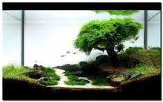 membuat aquascape bening 2014 aga aquascaping contest entry 331 aquarium design