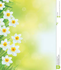 vector daffodil flowers frame royalty free stock photos image