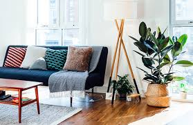 home interior plants a guide to the best indoor plants