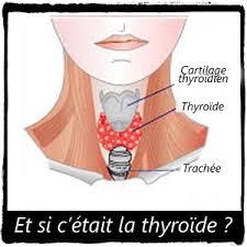 poids si e auto la diététique de votre thyroïde conseils pour maigrir