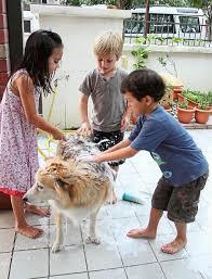 Make Bathtime Fun For Your Dog Preparing Your Dog For A Bath Star2 Com