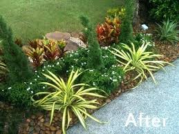 Tropical Plants For Garden - best plants for tropical garden plants for tropical gardens