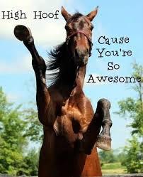 High Horse Meme - review us on great non profits hosanna horse haven equine rescue