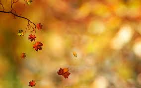 Fall Autumn by Fall Autumn Wallpapers Wallpaper Cave