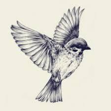 Bird Flying Tatoo Beautiful Level Of Detail If I Do Get That Hummingbird