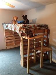 Easy Strong Cheap Bunk Bed Diy Wood Projects Pinterest by Best 25 Dog Bunk Beds Ideas On Pinterest Dog Beds Dog Rooms