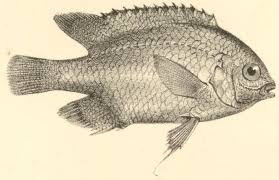 darwin online introduction to fish part 4 of zoology of the beagle