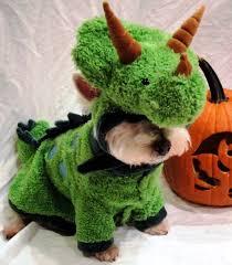 Yorkie Costumes Halloween 137 Pet Halloween Images Pet Costumes