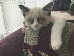 Meme Generator Grumpy Cat - grumpy template grumpy cat know your meme is grumpy cat a