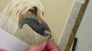 afghan hound afghan hound nose tutorial pastel pencils youtube