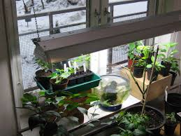 Apartment Patio Ideas C H I L I B L O G The Mini Apartment Garden New Friends 18 Indoor