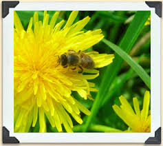 Flowers Bees Pollinate - how do plants attract bees bees a honey of an idea