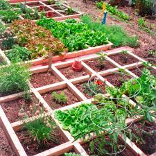 small vegetable garden layout design big garden picture designs