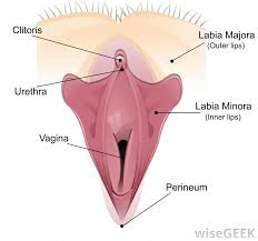woman s virgina what is a vaginal orgasm with pictures