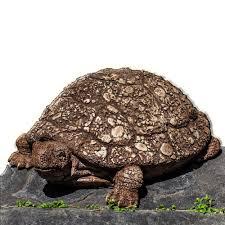 Turtle Planter Ole Crusty Cast Stone Garden Statue