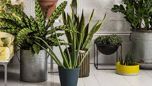 indoor plants that need little light plant indoor trees stunning indoor house plants low light guide